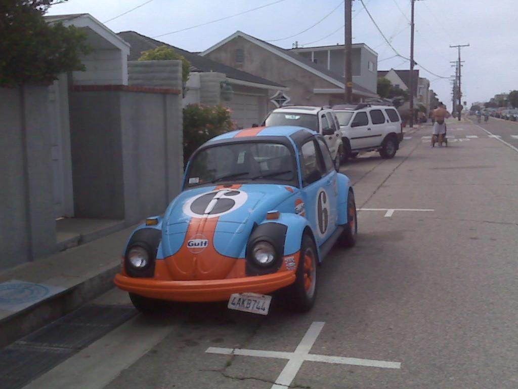 Gulf-painted Pantera-gulf-beetle-2-jpg