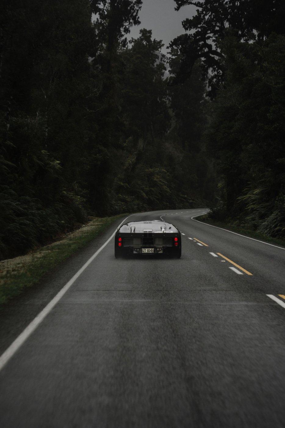 Rain forest copy.jpg